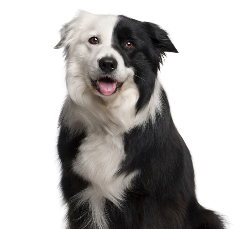 Large Dogs, Apple Valley Animal Hospital